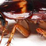كيفية القضاء على الحشرات